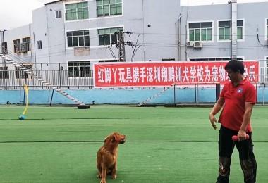 2020年8月7日红脚丫玩具携手深圳翔鹏训犬学校为宠物增添快乐